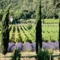 Rosé Emotion de Provence 2015 wanderwine Rose Provence